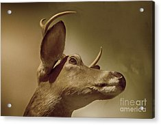 Florida Deer Acrylic Print by Judy Hall-Folde