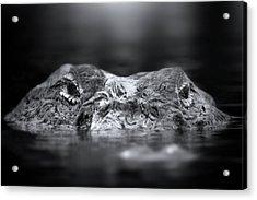 Florida Gator Acrylic Print