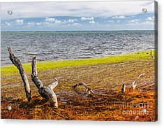 Florida Keys Colors Acrylic Print by Elena Elisseeva
