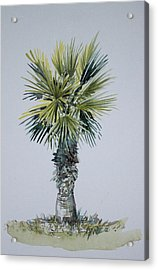 Florida Palm Botanical Acrylic Print