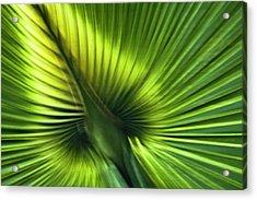 Florida Palm Frond Acrylic Print by Carolyn Marshall