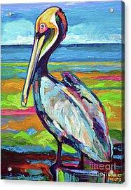 Florida Pelican Acrylic Print
