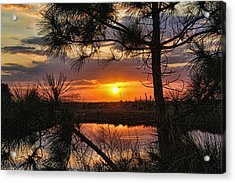 Florida Pine Sunset Acrylic Print by HH Photography of Florida