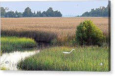 Acrylic Print featuring the photograph Florida Saltmarsh by Peg Urban