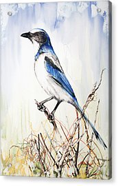Acrylic Print featuring the mixed media Florida Scrub Jay by Anthony Burks Sr