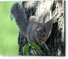 Florida Squirrel Acrylic Print by Evelyn Patrick