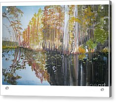 Florida Swamp Acrylic Print by Hal Newhouser