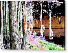 Florida Swamp Acrylic Print by Peter  McIntosh