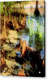 Florida Swamplands Acrylic Print by Rianna Stackhouse