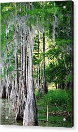 Florida Swamps Acrylic Print by Peter  McIntosh
