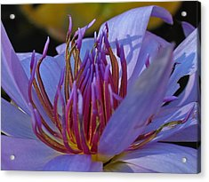 Florida Water Lily Acrylic Print by Juergen Roth