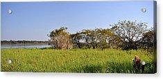 Florida Wetlands Panoramic Acrylic Print