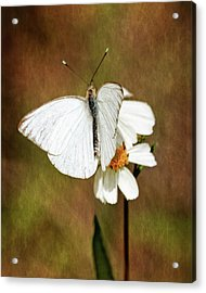 Florida White Acrylic Print by Dawn Currie