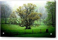 Flourish Where You Grow Acrylic Print by Angela Davies