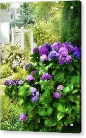 Flower - Hydrangea - Lovely Hydrangea  Acrylic Print by Mike Savad