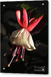 Flower 0021-a Acrylic Print by Gull G