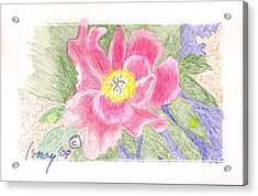 Acrylic Print featuring the drawing Flower 3 - Pink Single Peone by Rod Ismay