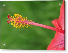 Flower 5 Acrylic Print by Eric Workman