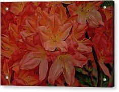 Flower 7 Acrylic Print