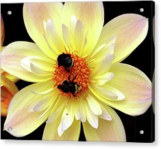 Flower And Bees Acrylic Print