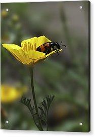 Flower And Bug Acrylic Print by Svetlana Sewell