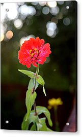 Acrylic Print featuring the photograph Flower And Hope by Vadim Levin