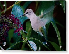 Flower And Hummingbird Acrylic Print