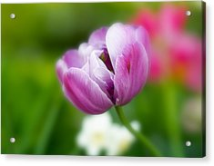 Acrylic Print featuring the photograph Flower by Anthony Rego