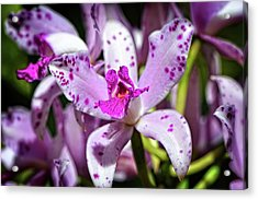 Flower Art - Intimate Orchid 4 - Sharon Cummings Acrylic Print by Sharon Cummings