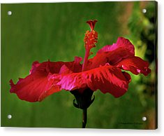 Flower Acrylic Print by Chaza Abou El Khair