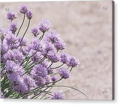 Flower Chives Acrylic Print