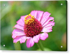 Flower Close-up Acrylic Print