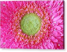 Flower Closeup Acrylic Print by Deepak Pawar