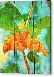 Flower Cup, Hibiscus Acrylic Print