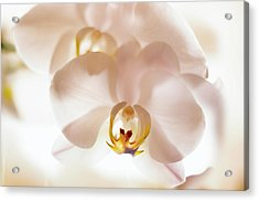 Flowers Delight- Acrylic Print