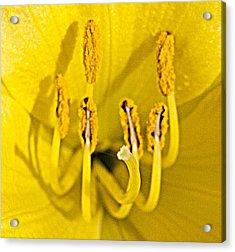 Flower Detail Acrylic Print