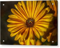 The Flower Inspector Acrylic Print