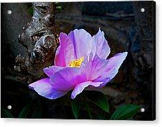 Flower. Dumbarton Oaks Gardens Acrylic Print