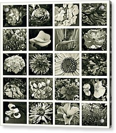 Flower Favorites Bw Acrylic Print by Gwyn Newcombe
