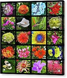 Flower Favorites Acrylic Print by Gwyn Newcombe