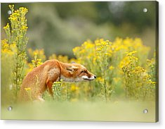 Flower Fox Acrylic Print