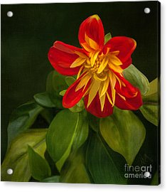 Flower From Seward Garden Acrylic Print