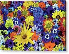 Flower Garden 1 Acrylic Print by JQ Licensing