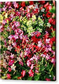 Flower Garden 1 Acrylic Print