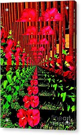 Flower Garden Abstract Acrylic Print by Marsha Heiken