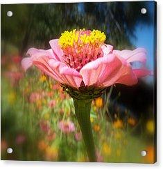 Flower Garden Acrylic Print by Dottie Dees