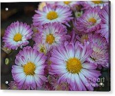 Flower Garden Acrylic Print
