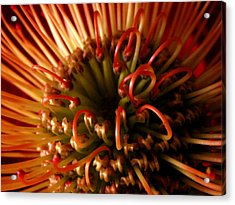 Acrylic Print featuring the photograph Flower Hawaiian Protea by Nancy Griswold