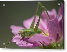 Flower Hopper Acrylic Print by Michael Eingle