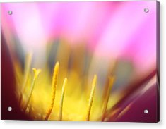 Flower Impressions I Acrylic Print